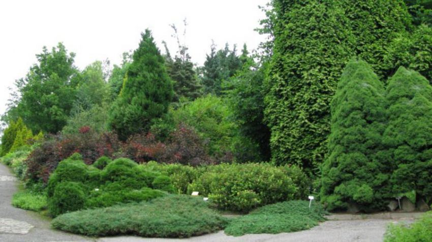 Ogród Botaniczny - Dział Dendrologii (Arboretum)
