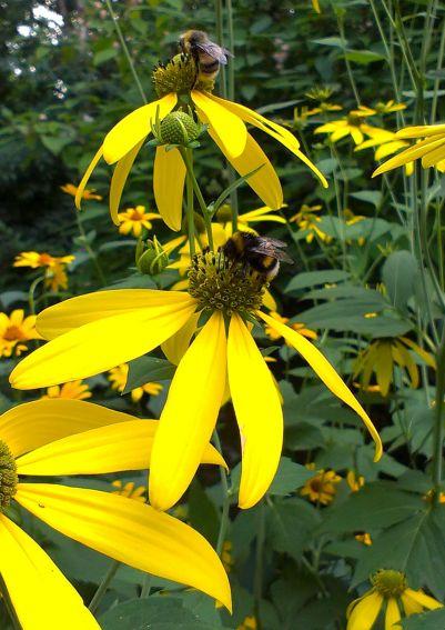 Wielki Dzień Pszczół w Ogrodzie Botanicznym (2014)