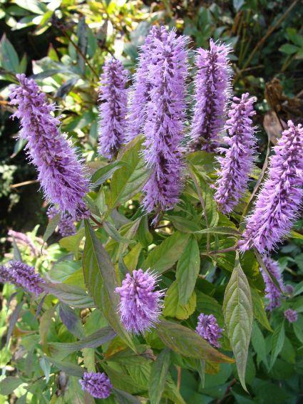 Ogród Botaniczny - październik -
