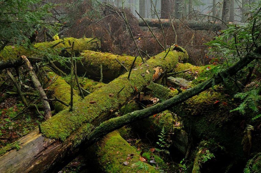 Roztoczański Park Narodowy - przyroda i człowiek