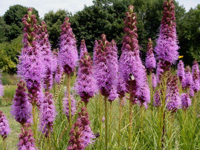 Ogród Botaniczny - sierpień -