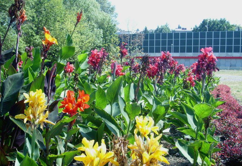 Ogród Botaniczny - pacioreczniki