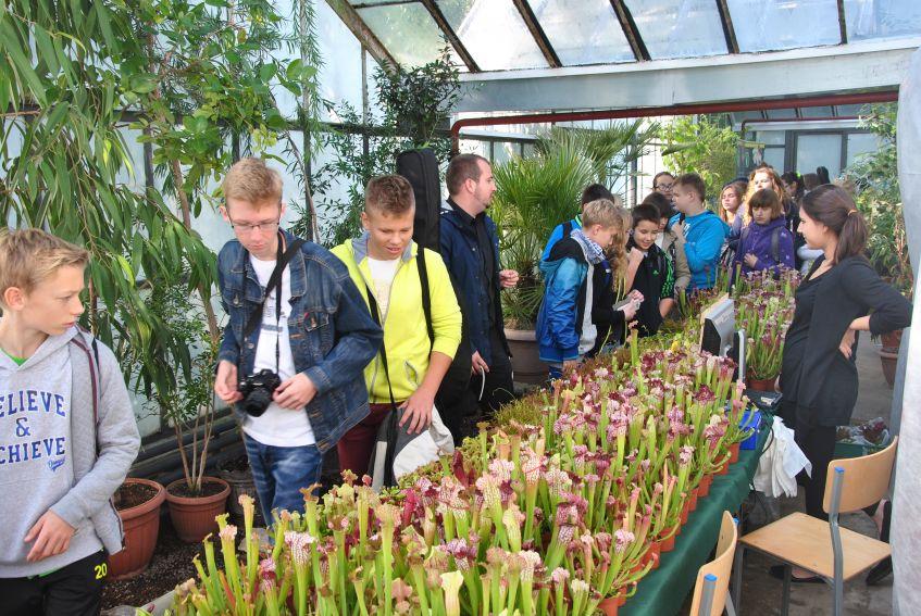 Wystawa roślin owadożernych - 2015