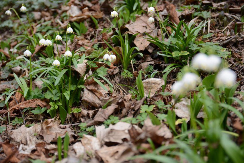 Pierwszy dzień wiosny w Ogrodzie Botanicznym
