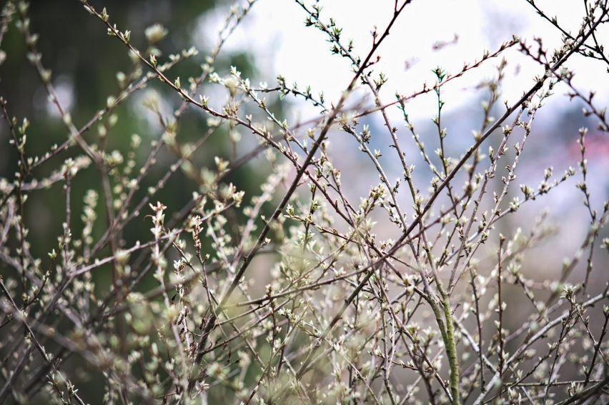Roślinność w Ogrodzie Botanicznym