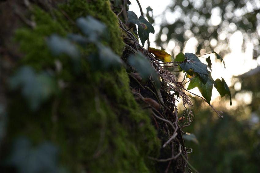 Sadzenie drzewek w Ogrodzie Botanicznym