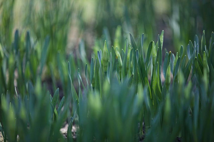 Pierwsze oznaki wiosny w Ogrodzie Botanicznym