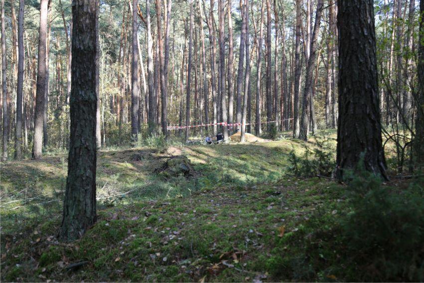 Lublin-Zemborzyce (las Rudki) - jesień 2017