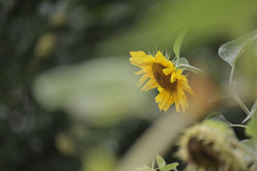 Spacer z przewodnikiem w Ogrodzie Botanicznym