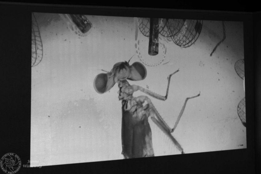"""Warsztaty Entomologiczne: """"Niesamowity świat owadów"""""""