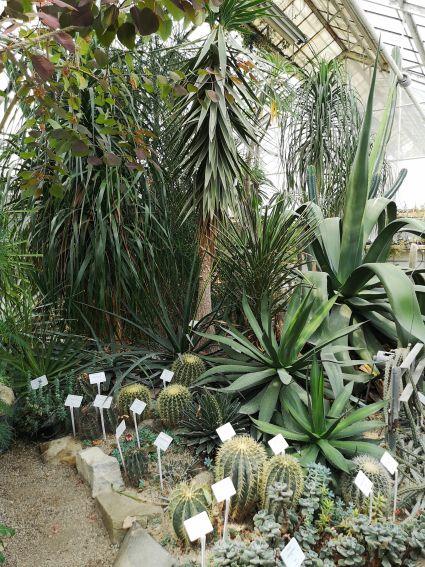 Dział Roślin Tropikalnych i Subtropikalnych