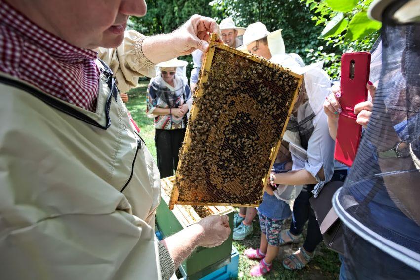 Święto Pszczół w Ogrodzie Botanicznym UMCS