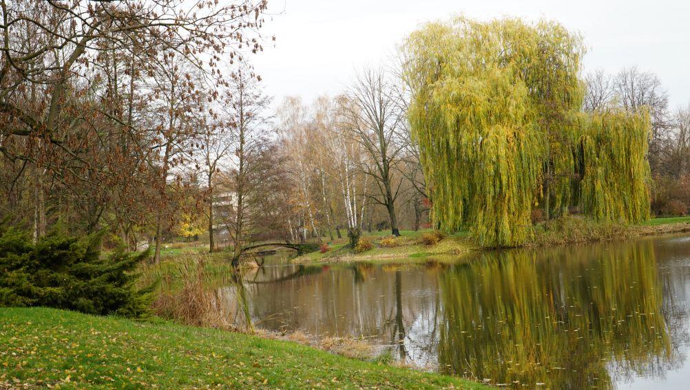 Listopad w Ogrodzie