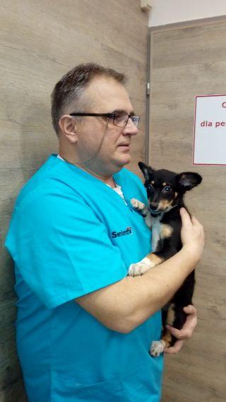 """II edycja akcji charytatywnej """"Pomóż psiakom i kociakom"""""""