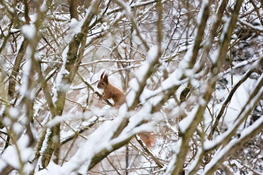 Zima w Ogrodzie Botanicznym UMCS