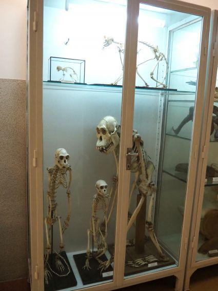 Ekspozycja osteologiczna