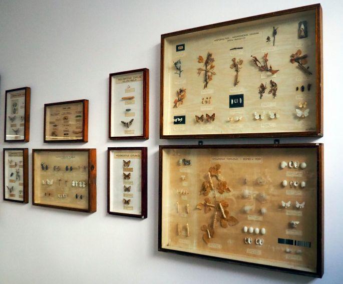 Pracownia entomologii stosowanej