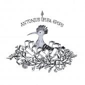 antonius.png