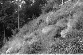 flora Polski 3.jpg
