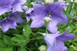 Dział Roślin Górskich (Alpinarium) -