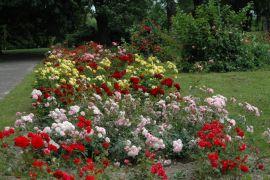 Ogród Botaniczny -