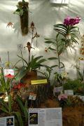 Wystawa storczyków