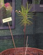 Wystawa roślin mięsożernych