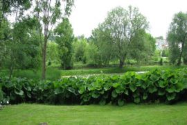 flora Polski.jpg