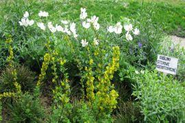 flora Polski 2.jpg
