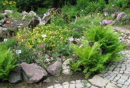 Dział Roślin Górskich
