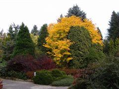 Arboretum - jesień.JPG