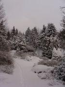 Arboretum zimą.JPG