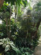 rośliny tropikalne.jpg