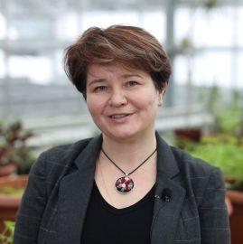 dr hab. Małgorzata Wójcik