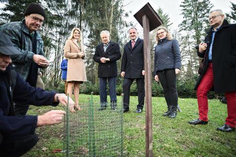 Drzewka z okazji 700-lecia Miasta Lublin