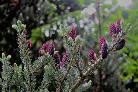 Dzień Roślin i Noc Muzeów w Ogrodzie Botanicznym (18.05.)