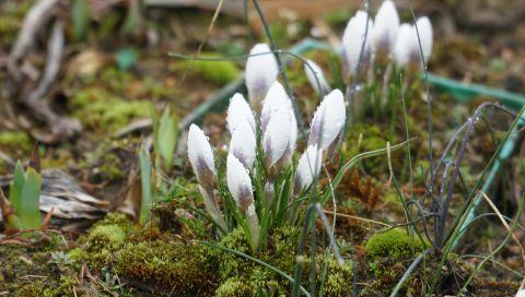 13 kwietnia 2020 - otwarcie Ogrodu po zimowej przerwie