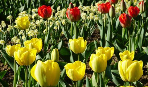 8 marca: Dzień Kobiet
