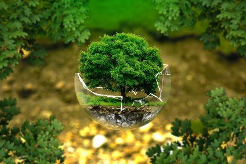 Światowy Dzień Ochrony Środowiska 2021