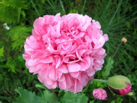 Ogród Botaniczny szuka ogrodników