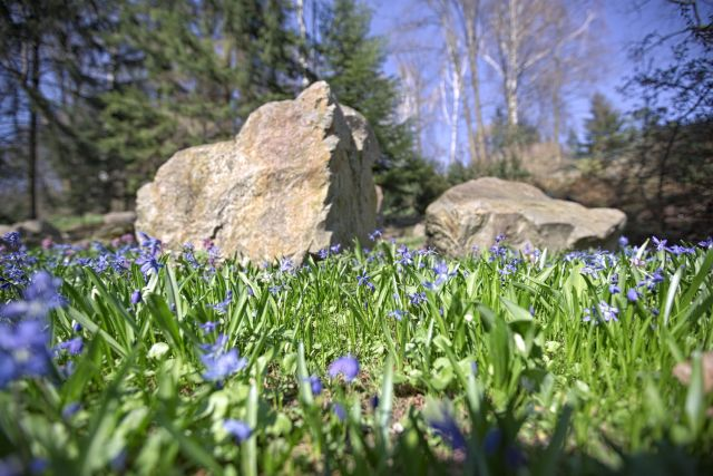 Ogród Botaniczny - zdjęcie