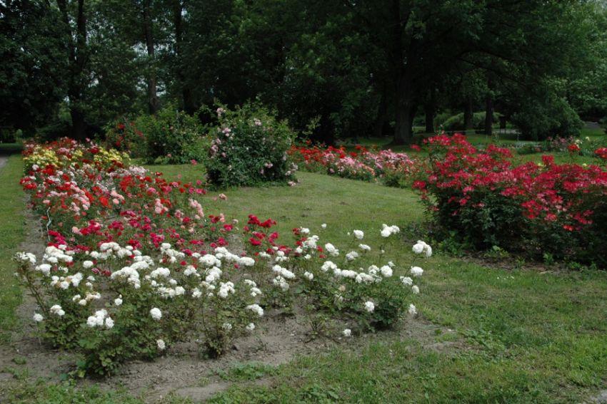 Ogrod Botaniczny -
