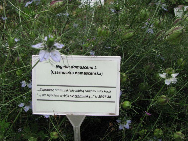 Ogród Botaniczny - Rośliny Biblijne