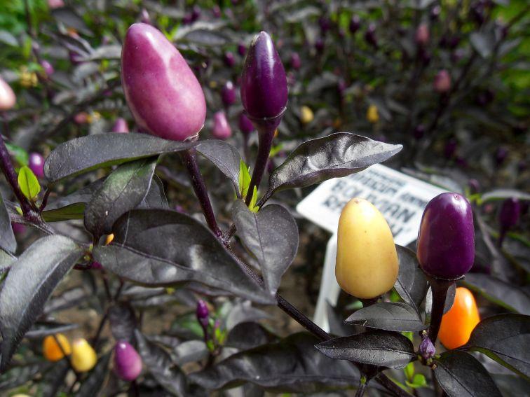 Ogród Botaniczny - Dział Roślin Użytkowych