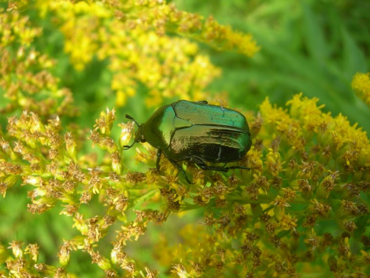 """Warsztaty Entomologiczne """"Świat owadów wokół Nas"""""""